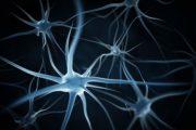 Alzheimer's Disease Discovery