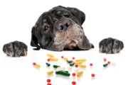 Can you Give your Dog or Cat Aspirin?