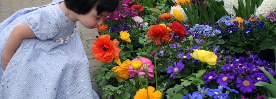 Visit the Botanical Gardens!
