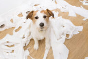 The Pandemic and Pet Separation Anxiety