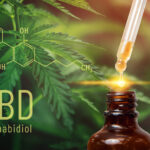 Cannabis CBD oil extracts in jars herb and leaves. Concept medical marijuana