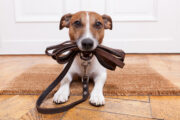 Training for a Well-Behaved Pet