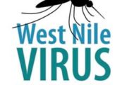 Mosquitos in Erie County Test Positive for West Nile Virus