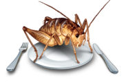 How to Keep Bugs off Your Food