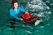 Swim Therapy for Canines!