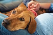Coping With the Loss of A Pet