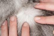 Ticks and Lyme Disease Warning