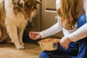 Picky Pooches: Solutions for Finicky Eaters